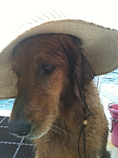 Skeeter dive dog with hat