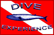 Dive Experience Logo